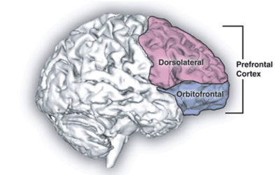 Why is the dorsolatereral prefrontal cortex (DLPFC) the favorite region to stimulate?